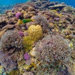 沖縄のダイビングでサンゴの綺麗なダイビングスポット!