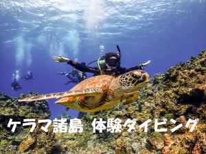 ケラマブルー ケラマ諸島体験ダイビング!