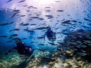 沖縄 北部ダイビング