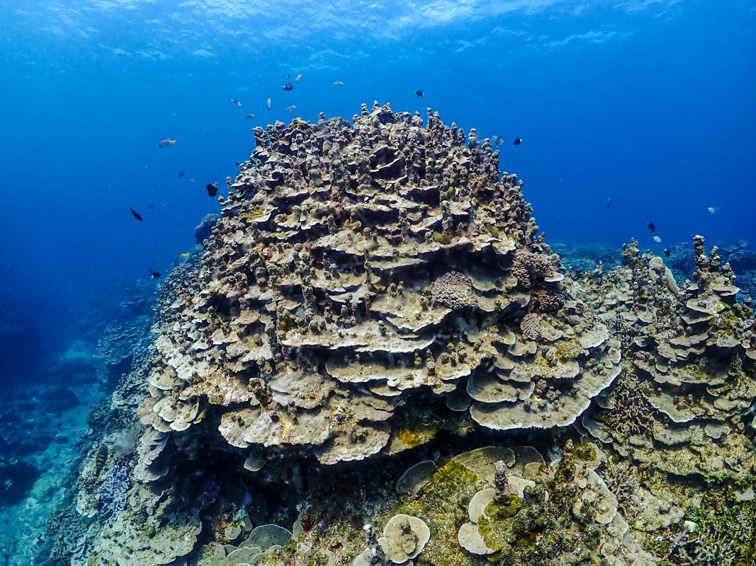 沖縄 東海岸ダイビング エッグ岩