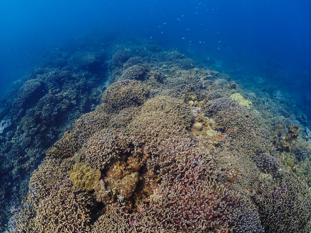 沖縄 東海岸ダイビング