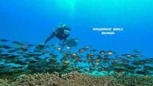水納島 ダイビング