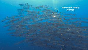 沖縄トライアングル ダイビング