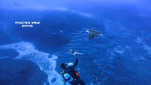 沖縄 トライアングル ダイビング
